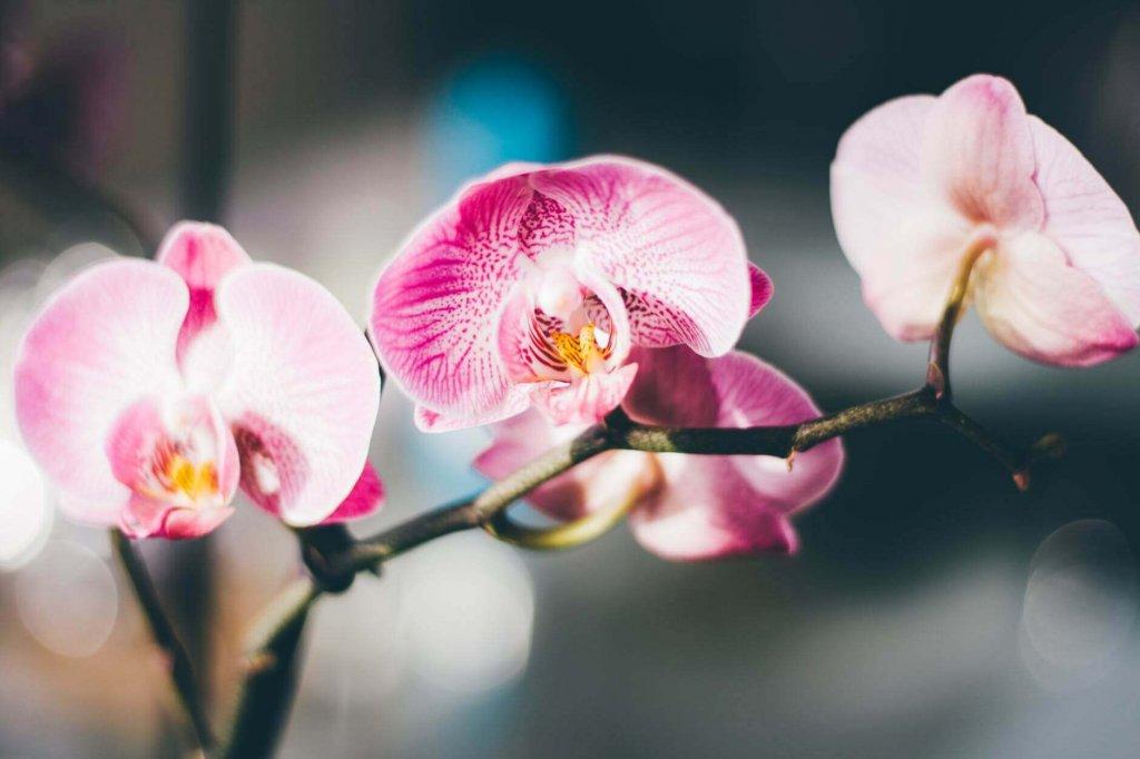 Orchideen Besichtigung - Ausflugstipps bei schlechtem Wetter im Sauerland-Urlaub