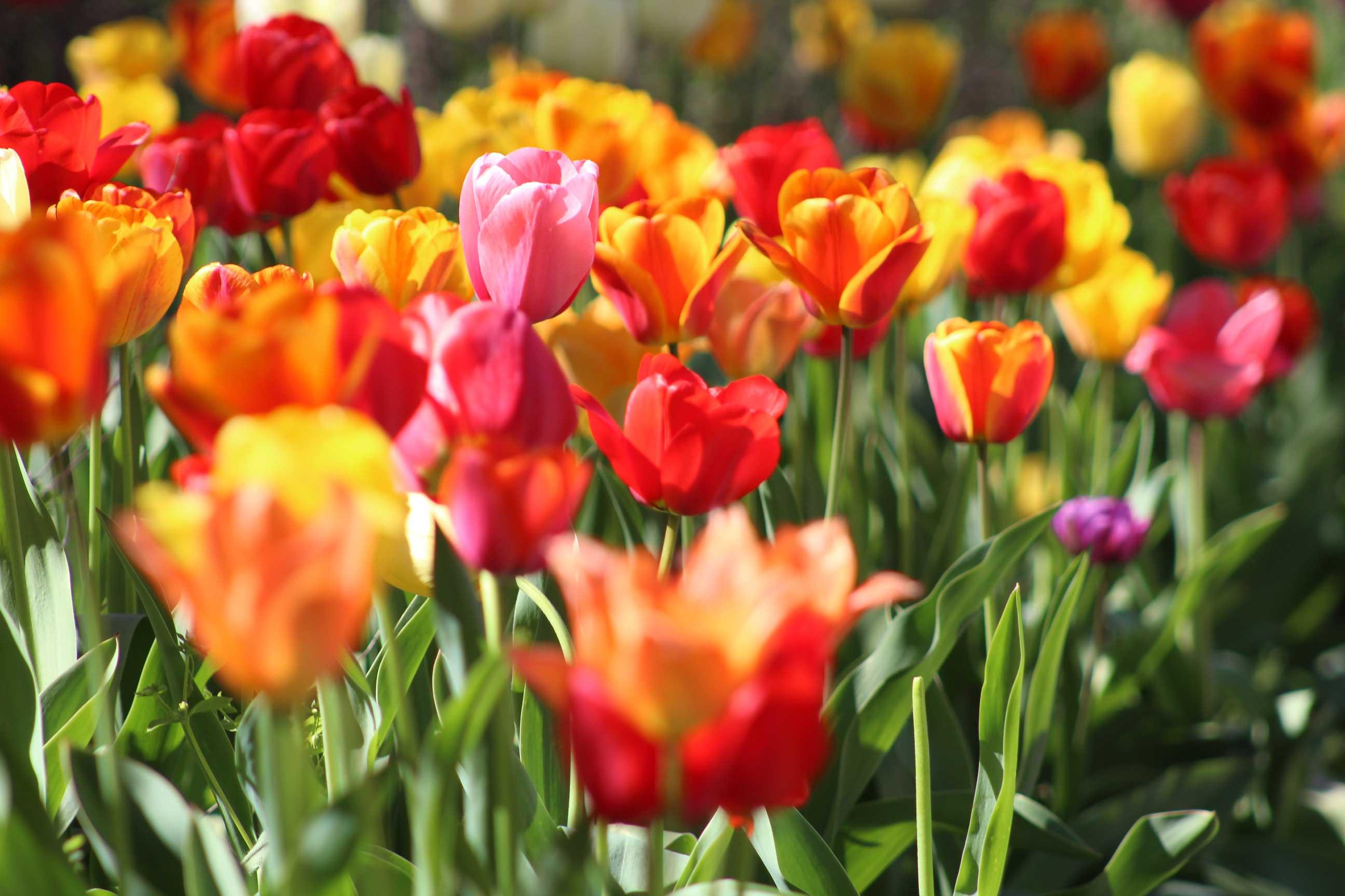 Frühjahrs-Special: Aktiv- und Entspannungsurlaub im Sauerland