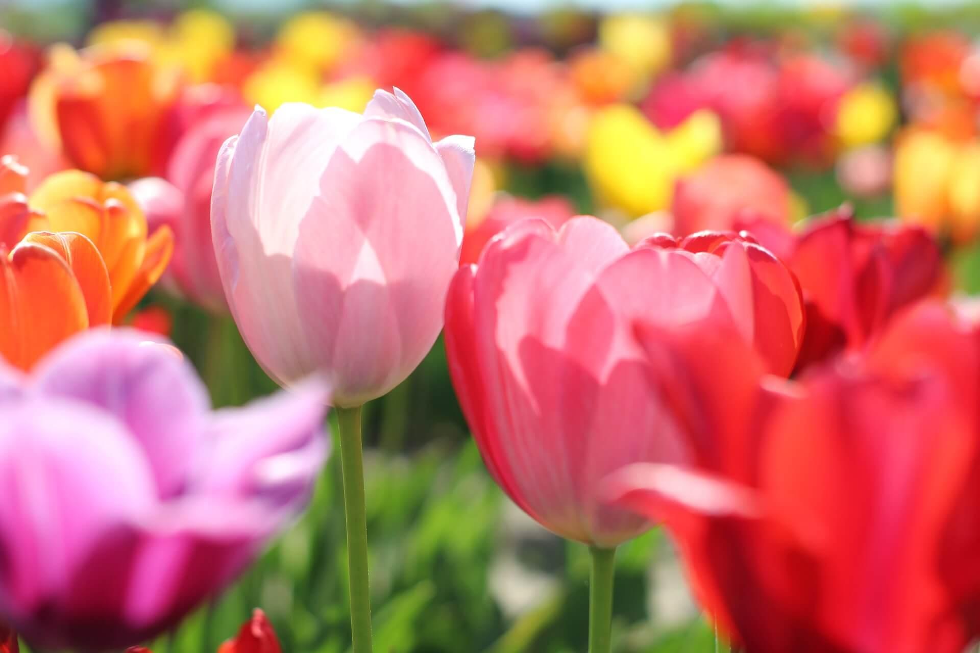 Frühjahrs-Special buchen und zwei Stunden Privat Spa geschenkt bekommen