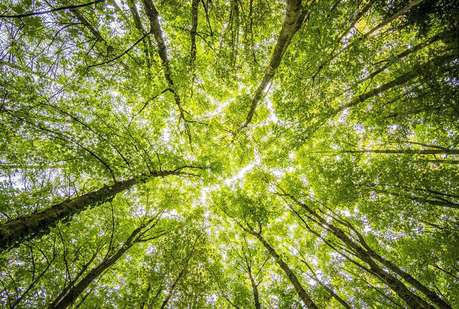 Nachhaltigkeit im Hotel: Regionalität im Fokus